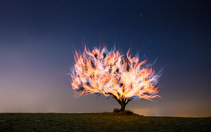 Burning bush. Photo 541137 © Noerpol | Lightstock